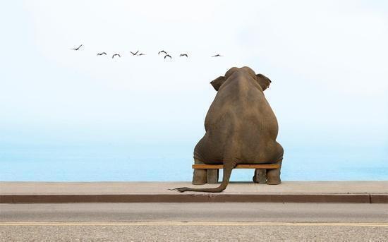 Fil gibi düşünmek